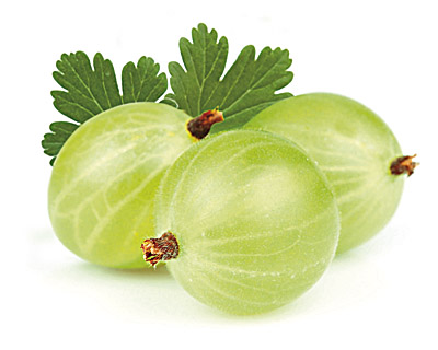 Gooseberries in Chocolate 100g