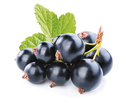Blackcurrants in Chocolate - bulk 2kg